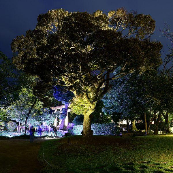 富士山本宮浅間大社・神田川ふれあい公園ライトアップ2021